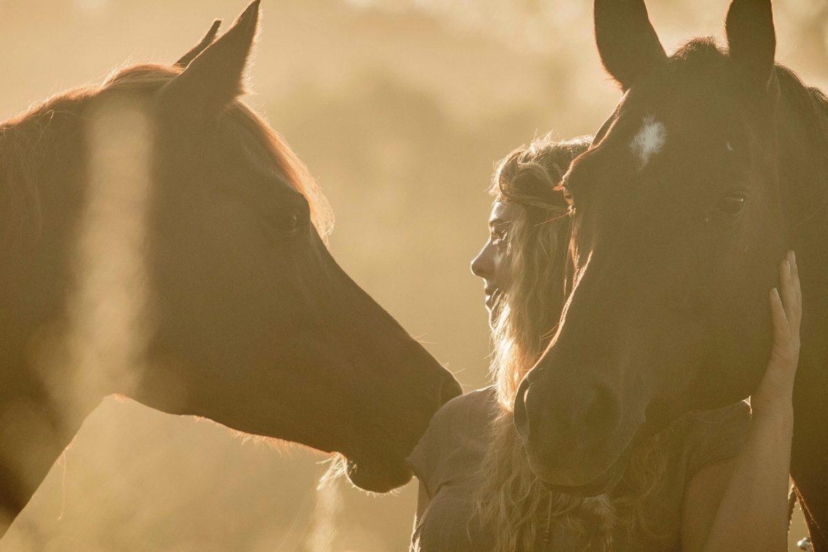 Son cavalls