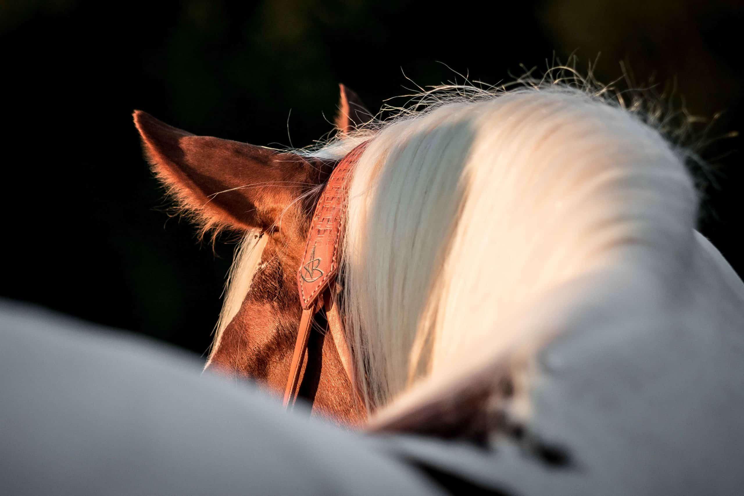horsehumanship